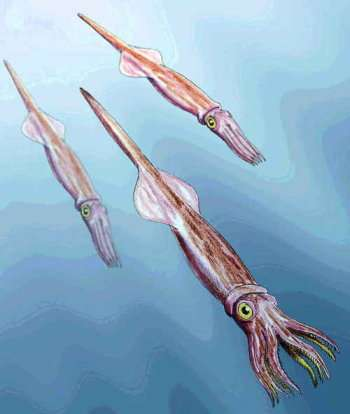 cretaceous belemnite1