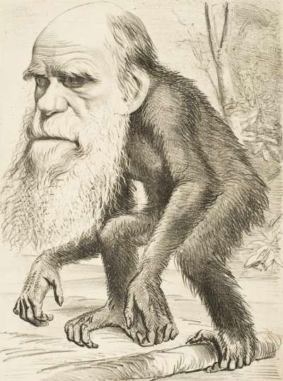 Editorial cartoon depicting Charles Darwin as an ape 1871