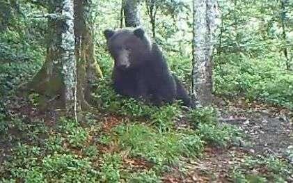 pyrenees decouvrez une video inedite d un ours en plein jour