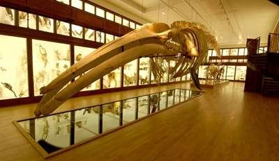 baleine2008