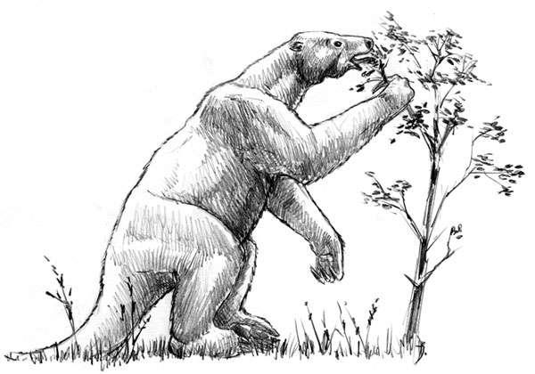 shasta giant sloth
