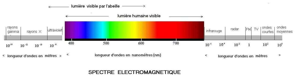 spectre electromagnetique ondes lumiere