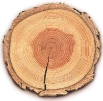 arbre_cernes
