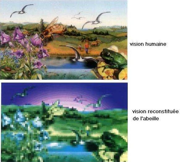paysage_vu_par_abeille