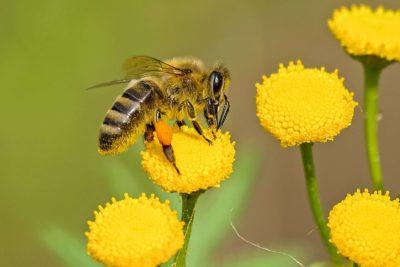 animal bee bloom 460961