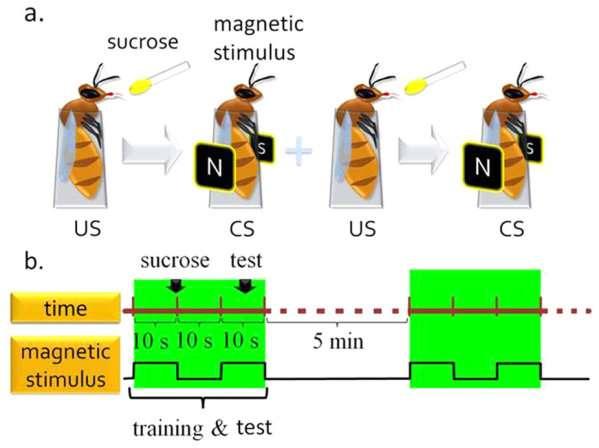abeille_magnetisme