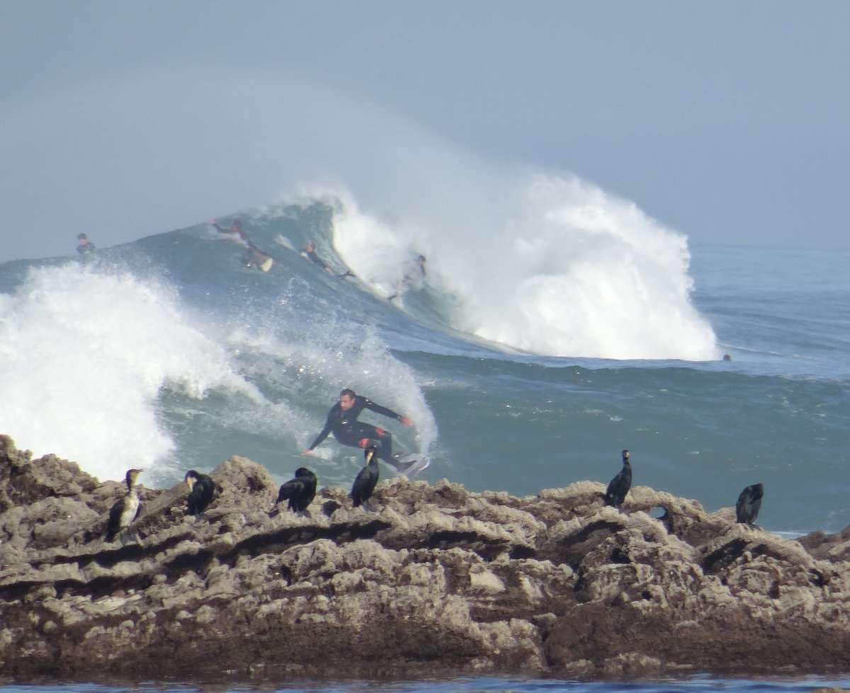 1 Cormorans et surfers