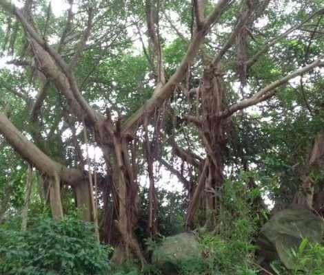 Deux arbres dont les noms sont indiqués sur les deux plaquettes qui vont suivre