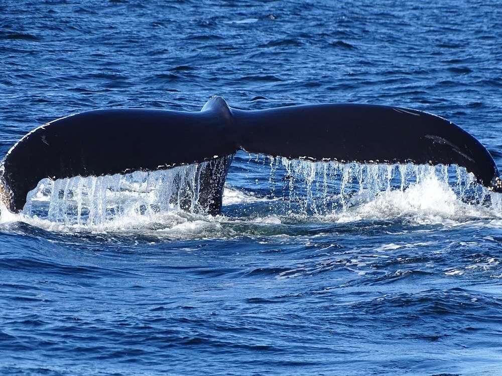 10 Baleine