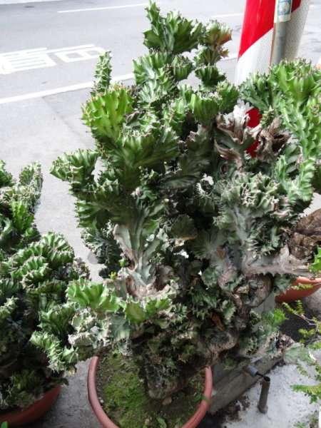 10 Compositions de plantes ville de Chiayi