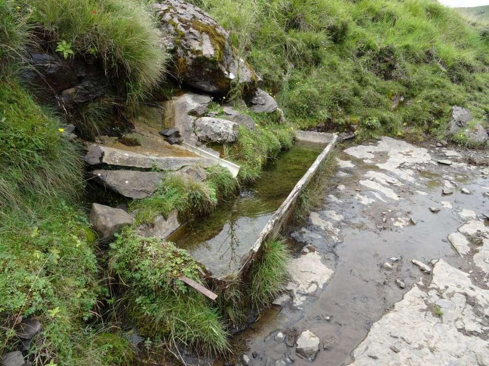 11 Un abreuvoir peu entretenu au fond duquel poussent des herbes aquatiques. On y trouve aussi de beaux têtards.