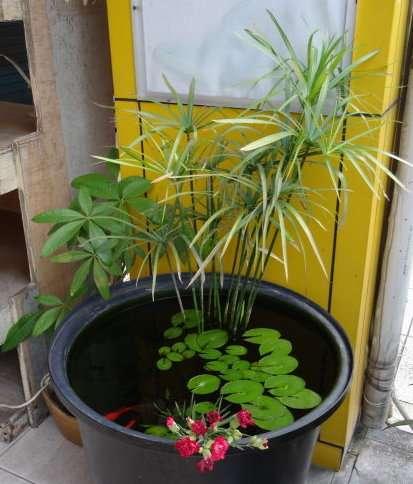 12 Compositions de plantes ville de Chiayi