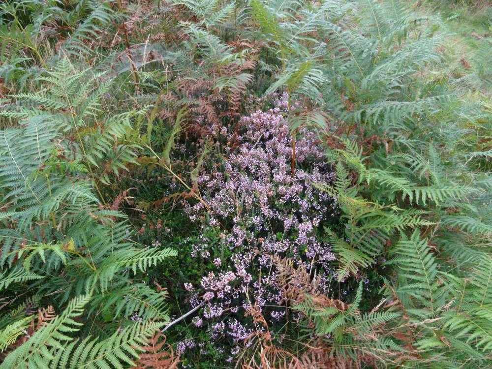 Sur l'Autza, il y a plusieurs espèces d'Ericacées