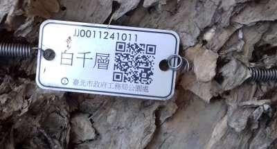 2 La plaquette indique que cest un cajeput cajeputier ou mélaleuque blanc Melaleuca cajuputi