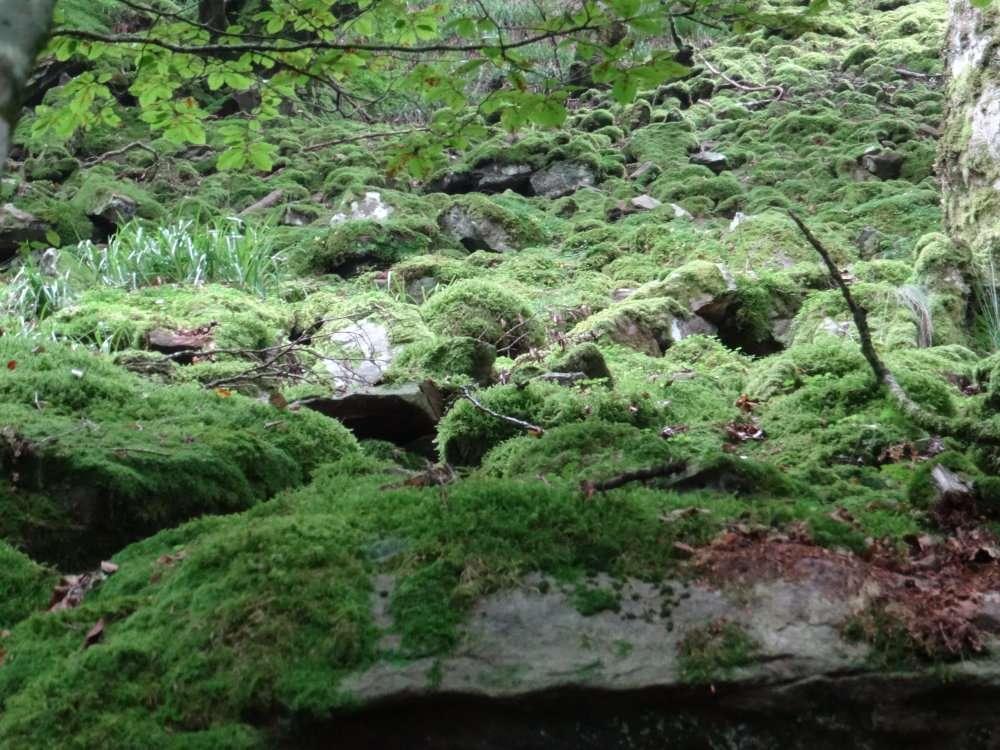 Tapis de mousse sur les roches