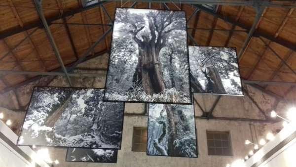 Exposition de photos d'arbres et de forêts à la Fabrique dans le centre-ville de Taïpei (locaux industriels d'une ancienne brasserie convertie en zone branchée)