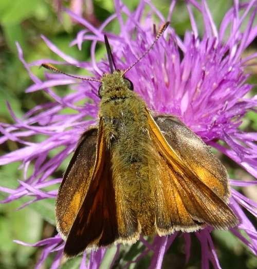 4 Les yeux sans cesse attirés par un nouveau papillonnement multicolore une chaleur moite due au foisonnement de la végétation qui transpire comme nous sous le soleil estival.