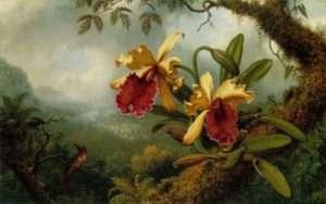 Martin Johnson Heade (1819-1904), peintre américain, Orchidées et colibri