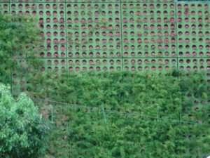 Mur végétalisé à Taipei