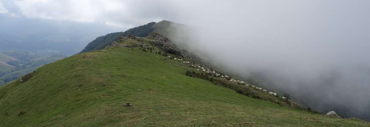 45 Pendant ce temps le reste du troupeau continue de brouter en contrebas impavide.