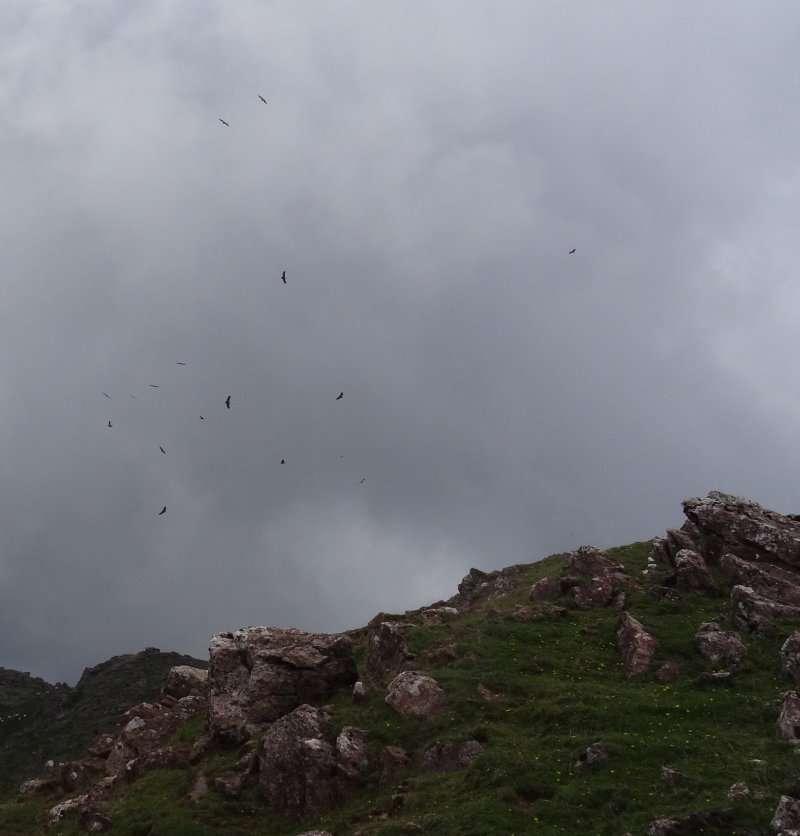 49 Les vautours reprennent leur surveillance du territoire.