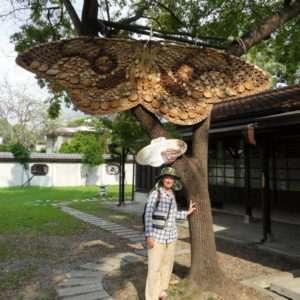 Cathy sous un papillon en rondelles de bois (Brahmane Insulata Inoue, Brahmaea wallichii) à Hinoki Village, Chiayi