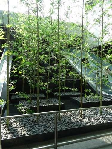Un bosquet de bambous à l'intérieur de la gare centrale de Taïpei (section du métro vers l'aéroport)