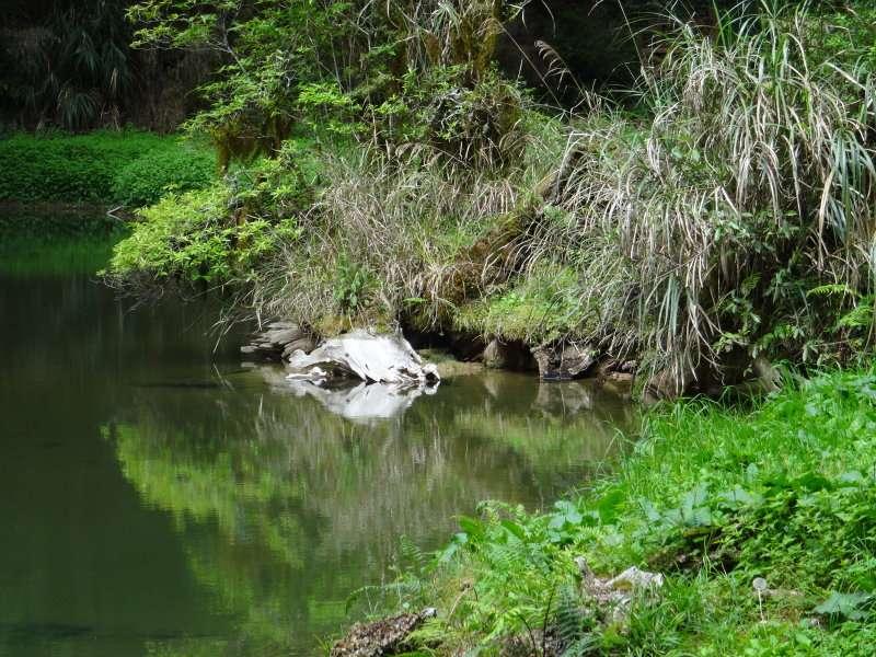 6 Zone récréative de la forêt dAlishan étang de la Grande Soeur Jiéjie