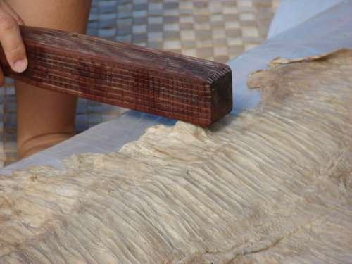 Martelagede l'écorce interne du mûrier d'Espagne