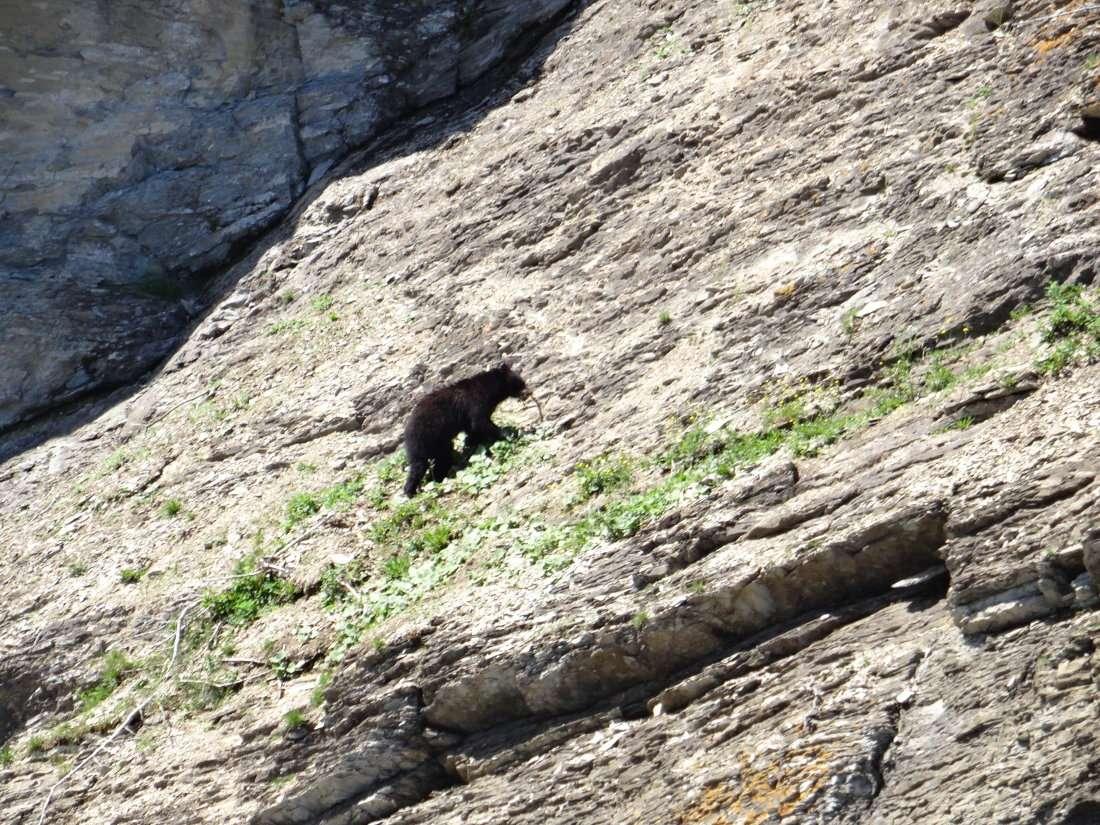 7 Observation depuis le zodiac que nous avions pris pour observer les phoques et la colonie de mouettes tridactyles nichant à flanc de falaise sur les corniches