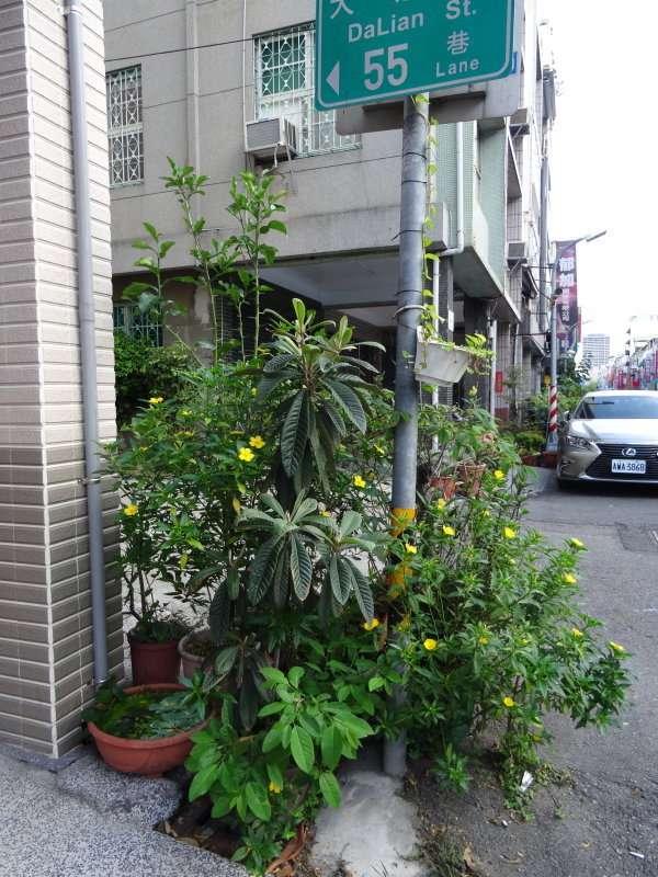 8 Compositions de plantes à chaque pas de porte ville de Chiayi