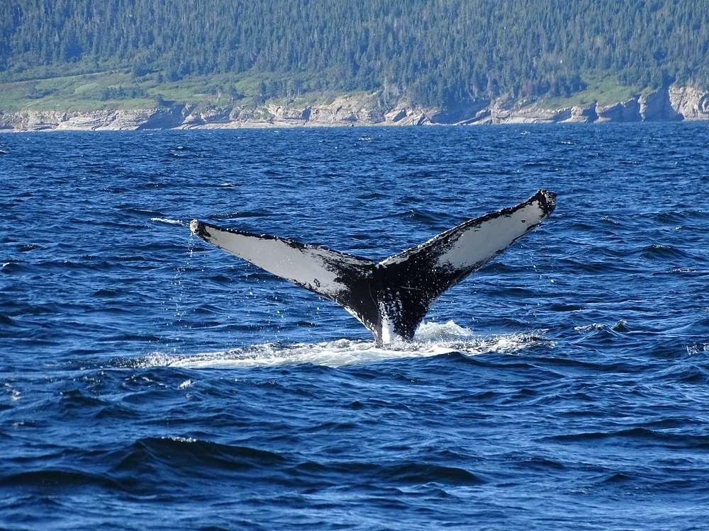 9 Baleine