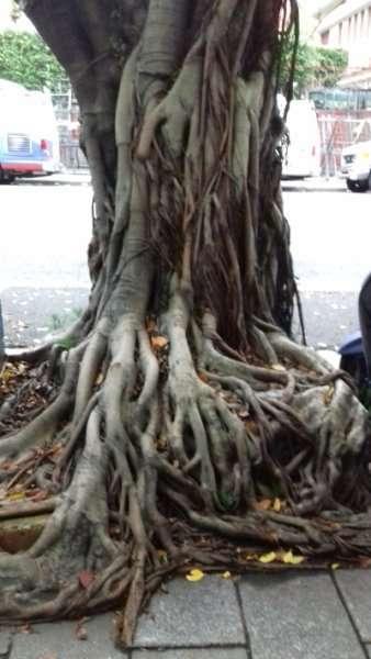 9 Compositions de plantes à chaque pas de porte ville de Chiayi