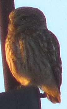 mP1340594