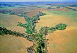 afforestation plan