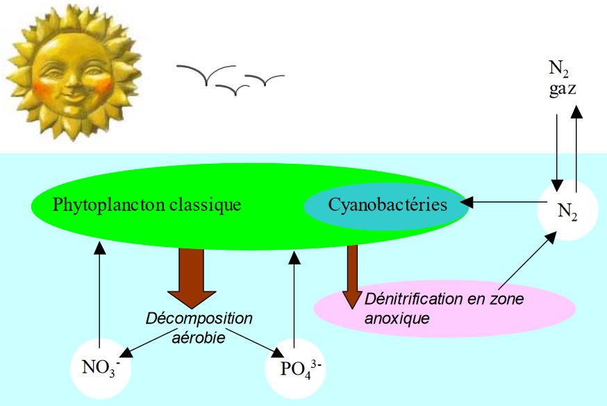 azote phosphore2