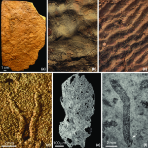 Putative animal traces and body fossils from pre Ediacaran successions a Putative