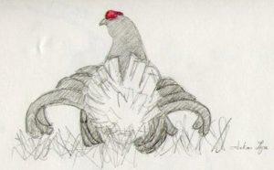 b3 T tras lyre crayon papier et aquarellable