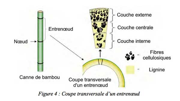 coupe entrenoeud