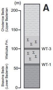 stratigraphie w