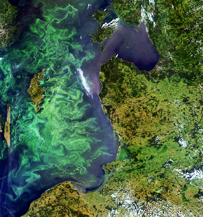 Envisat image of a phytoplankton bloom in the Baltic Sea pillars 1