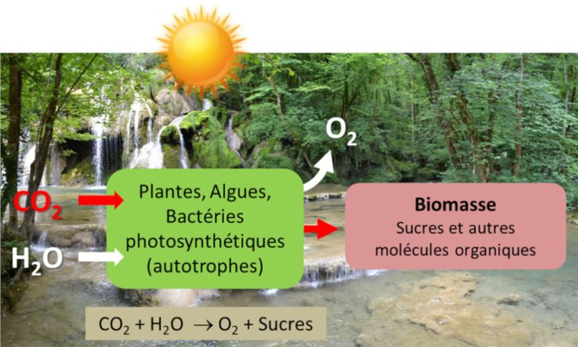 photosynthese fig1 schema